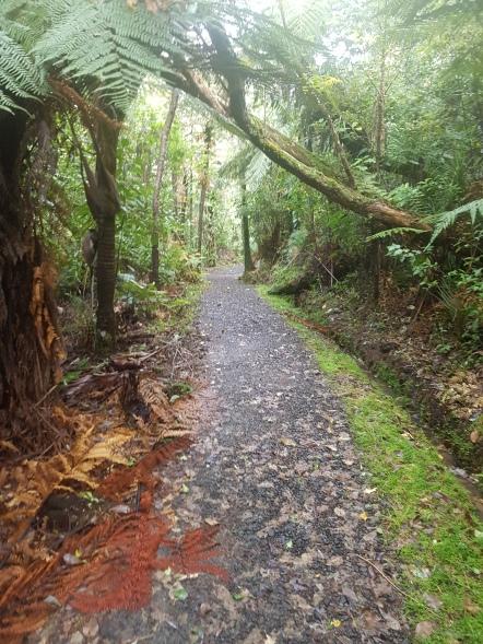 Auckland City Walk.