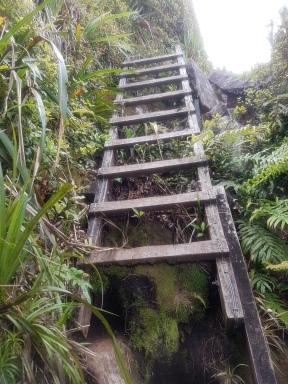 Just one of the wooden ladders.