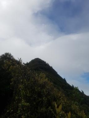 The peak of Mt Karioi
