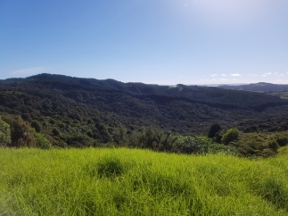 Mt Doom followed the border of the pine trees