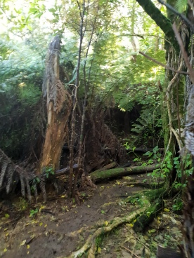 Single trail goodness.